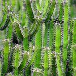 サボテンのトゲと水分の関係