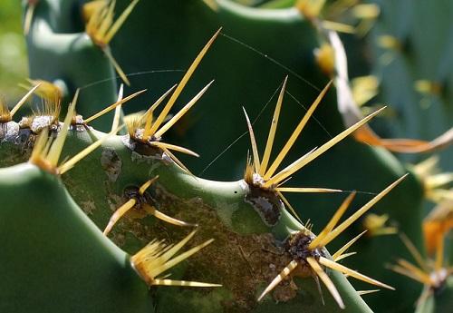 サボテン トゲ 花咲く なぜ 意味