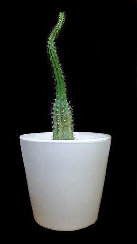 サボテン 観葉植物 効果 風水