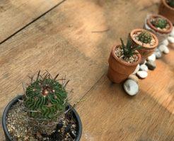 サボテン 花 種 蒔き方 実生 時期 方法