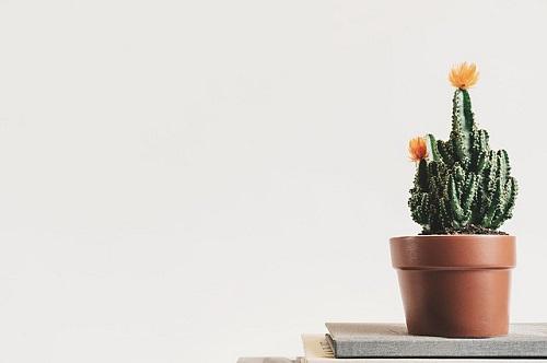 サボテン 花 育て方 水やり 温度 季節