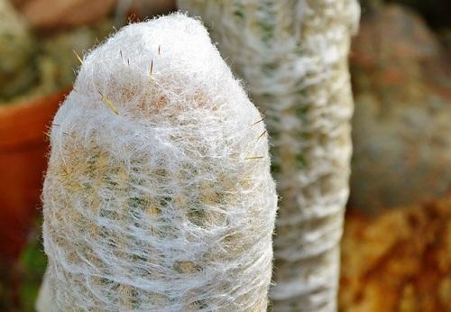 サボテン 白 毛 トゲ 液体