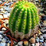 サボテンの種子の取り出し方と保存法を調べてみよう!