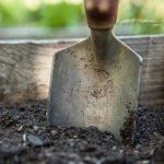 サボテンの植え替え!根傷みしない時期は?土の種類は?