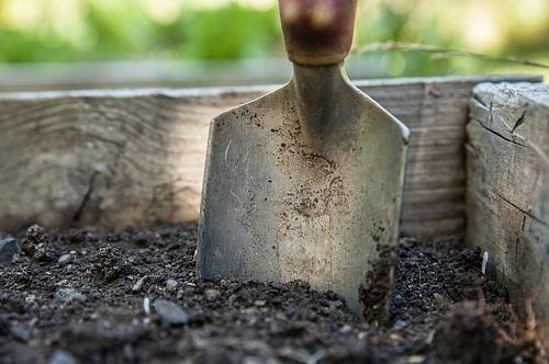 サボテン 植え替え 根 土 時期