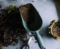 サボテン 土 配合 作り方 カビ 乾かない