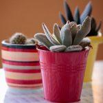 穴の空いてない鉢で育てたら、サボテンの根本に病気が出現!