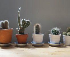 サボテン 小さい 育て方 種類 花 値段