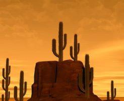 サボテン 砂漠 種類
