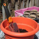 サボテンに活力を!土は殺菌をして、適した時期に種まきを!