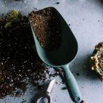 カビが発生しない、乾かないサボテンの土の配合!作り方は?