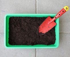 サボテン 土 肥料 種類 量